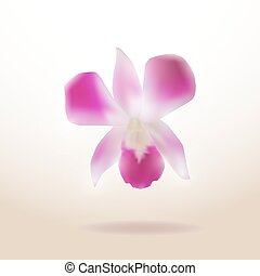Beautiful Orchid isolated on white background. Vector