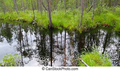 northern forest landscape with the river, Karelia, Russia