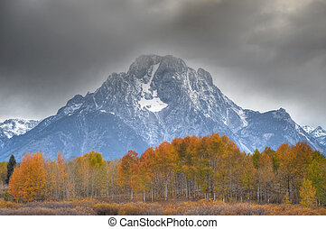 Autumn in Teton National Park - Yellow leaves of aspen...