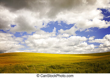 Field with dramatic sky.