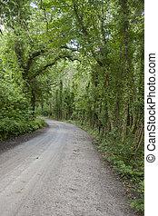 Killarney National Park; County Kerry