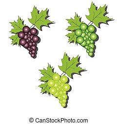 grape vector illustration eps 8