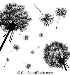 Dandelions silhouettes against white background