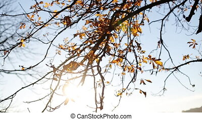 Close-up on beautiful autumn fall leaves blow in wind in a...