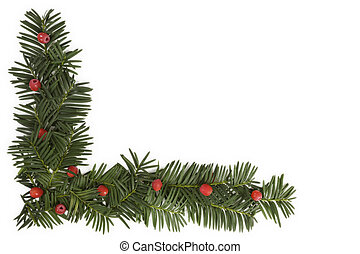 Christmas background with copyspace. Yew twig on white...