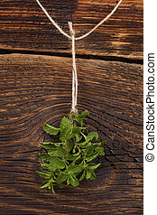 Mentha herb. - Fresh mentha hanging on rustic wooden...