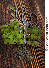Mentha. Aromatic culinary herbs, mint. - Mentha. Aromatic...
