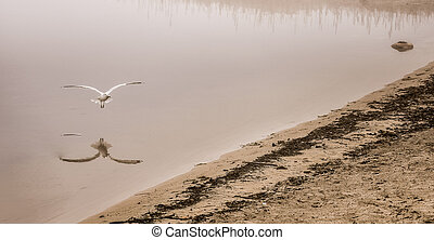 Seagull catches a crayfish in fog - A seagull plucks a...