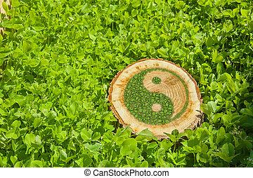Tree stump on the grass with ying yang symbol. - Tree stump...