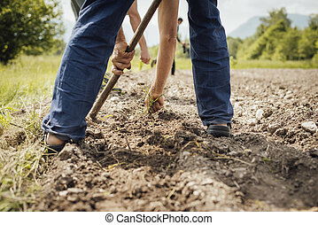 Farmers working in the fields hoeing and tilling the fertile...