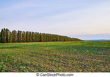Green field with trees line