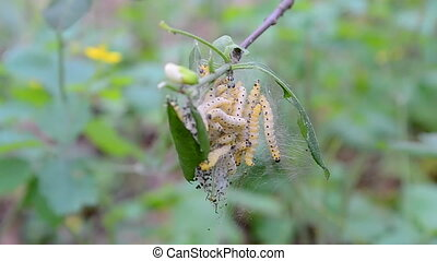 danger caterpillars closeup, summer environment, stress...