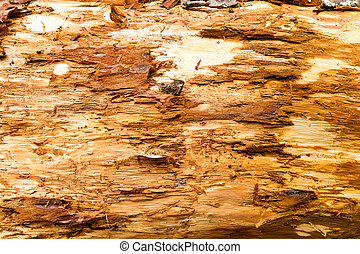 Old rotten wood - Closeup of old rotten wood. Background