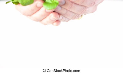 Woman hands offering Watercress.Food background texture and...