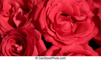 Beautiful bouquet of red roses is rotated - Valentines Day...