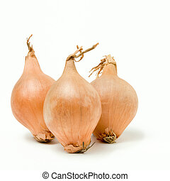 Shallot Line Up isolated against white background