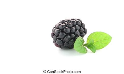 fresh berry blackberry - Fresh berry blackberry with green...