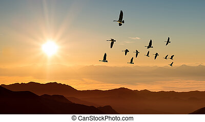 Autumn migration of cranes panoramic view - Birds at sunrise...