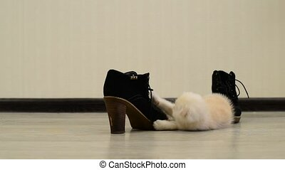 Beige kitten playing with shoe - Beige kitten playing with a...