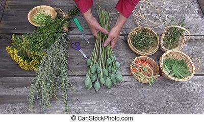 herbalist tying bundle of poppies - Man herbalist tying...