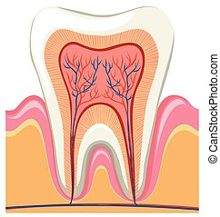 Inside on a single tooth illustration