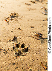 Animal foot print - Photo of an animal foot print on the...
