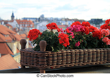 Selective focus on red flowers on the roof in Old Town of Prague