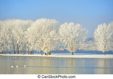 Frosty winter trees and birds on Danube river