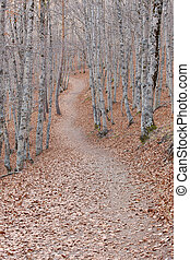 Pathway on a autumn beech forest landscape Tejera Negra...