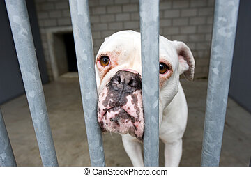 Animal shelter - Homeless dog behind bars in an animal...