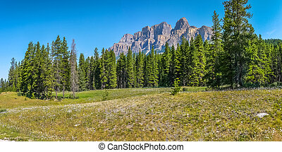 kanada,  Mountains, ostadig, Blomstrar,  Alberta, landskap