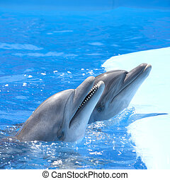 Dancing dolphins - Two dolphins at dolphinarium pool