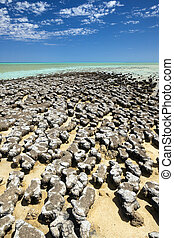 stromatolites - A photography of stromatolites at a sunny...