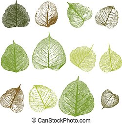 Vector leafs, isolated - Vector leaf on white background,...