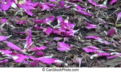 Petals floss-silk tree (Ceiba)