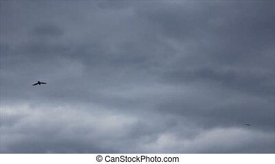 Black crow slides on the sky - Black birds slides at...