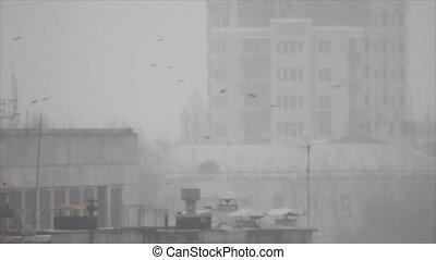 Birds flight between buildings in fog - Black birds flock...