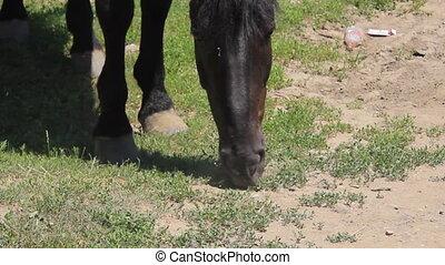 Horse eat close view - Horse eat green grass near...