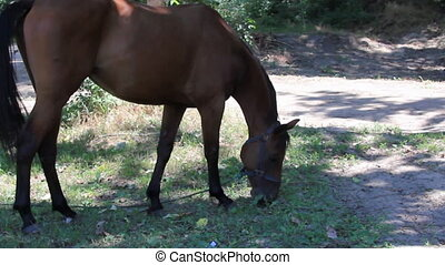 Young mare - Young chestnut foal pasturing in a grass near...