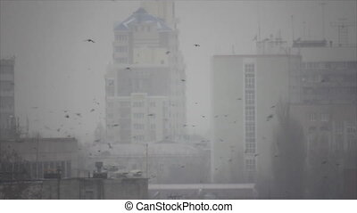 Many birds flight in frozen town morning