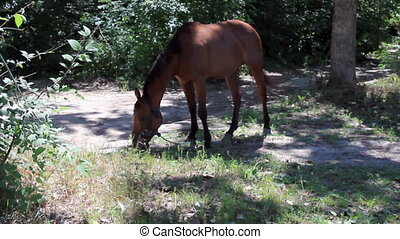 Horse grazing on glade in the forest