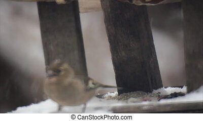 Winter bird feeder - Birds flight to wood feeder in snowfall