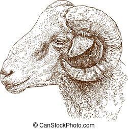 illustration of ram head - Vector engraving illustration of...