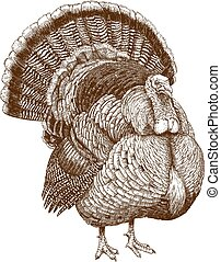 illustration of turkey - Vector engraving illustration of...