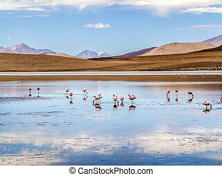 Pink flamingos in wild nature of Bolivia, Eduardo Avaroa...