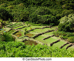 Terraced agriculture on Kauai - Example of terraced gardens...