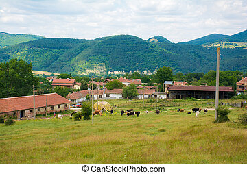 Beautiful rural views of houses and cows in the mountains -...