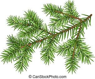 Green fluffy pine branch - Pine tree branch. Green fluffy...