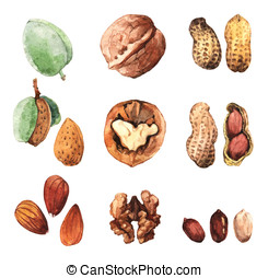 Culinary Nuts - Watercolour highly detailed clip art...