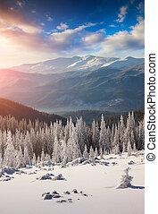 Colorful morning scene in the winter mountain.